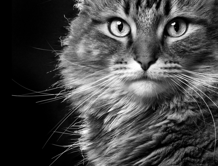 Conférence : Mon chat parle, mais que dit-il