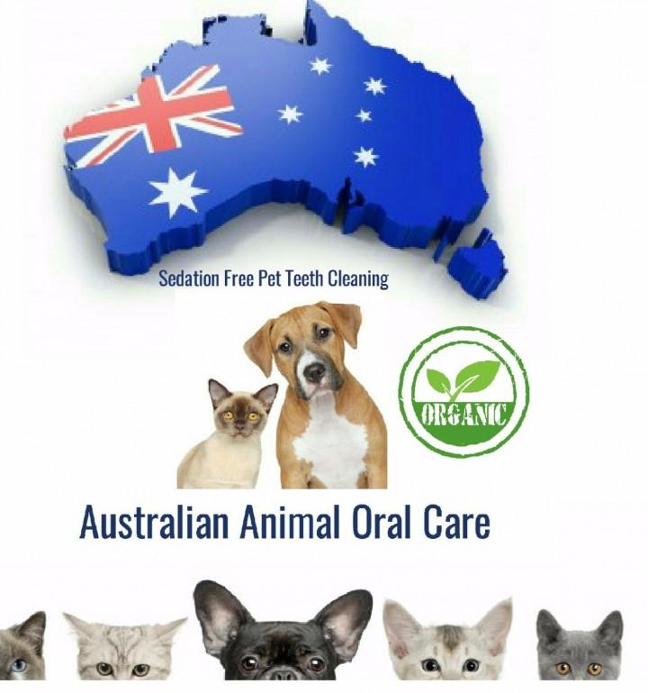 Dog Dental Clinic Brunwick