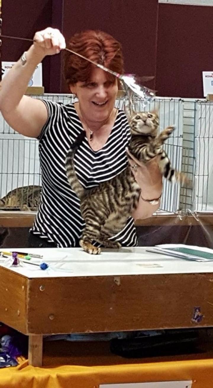 Westchester Feline Club Cat Show