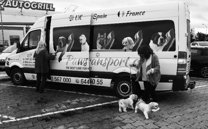 Paws Pet Transport Ltd