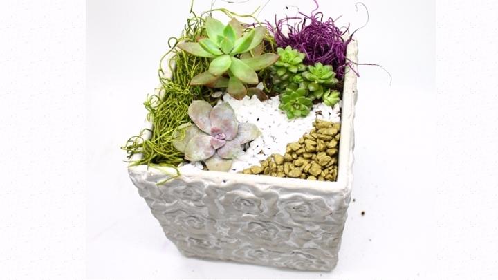 Plant Nite @ Iron Furnace