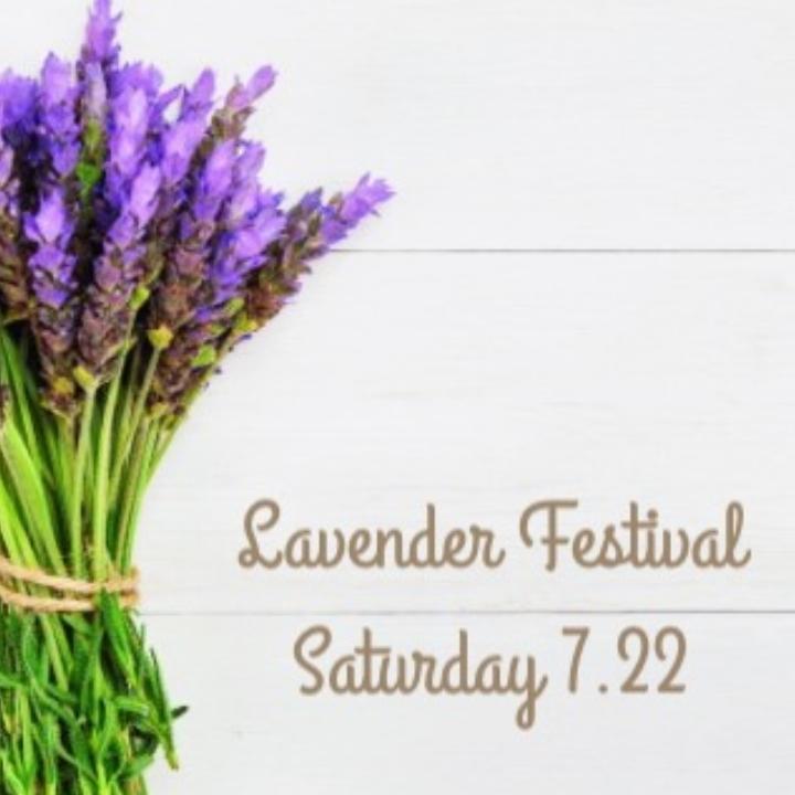 Lavender Festival with Lulu