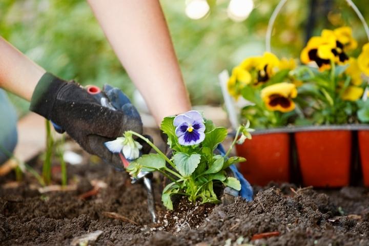 Curso de jardinería básica