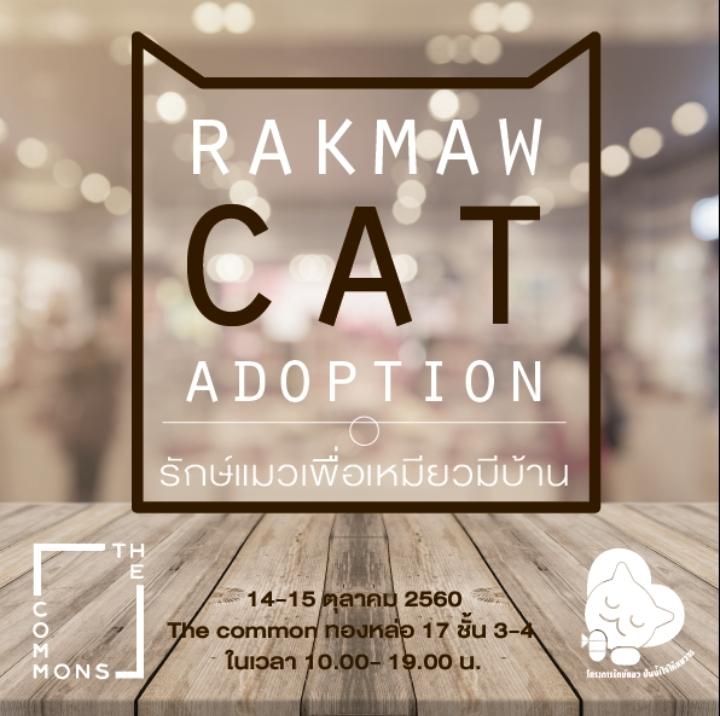 RAKMAW CAT ADOPTION