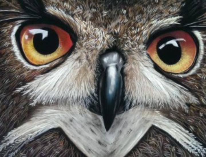 Workshop dierenportret met soft pastel