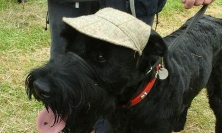 Framlingham Festivals of Dogs