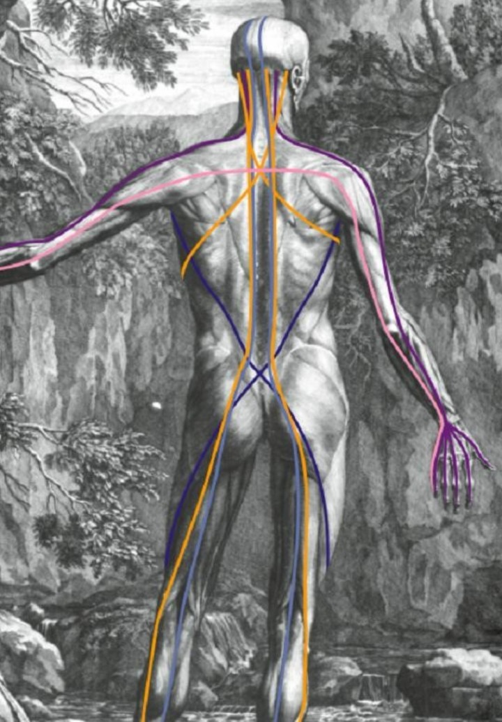 The Neurofascia Body