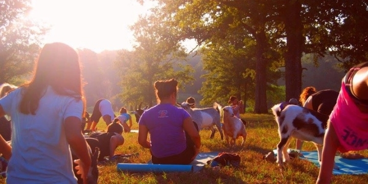 ATX Goat Yoga Happy Hour at The Hive - Austin, TX