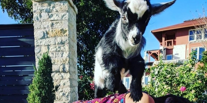 ATX Goat Yoga Happy Hour Event Overlooking Lake Travis - Austin, TX