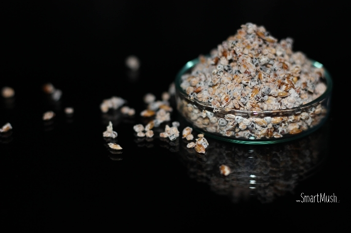 Formation à la culture de champignon à l'usin