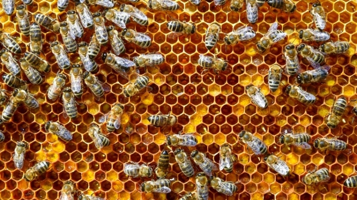 Bee Hive Dinner