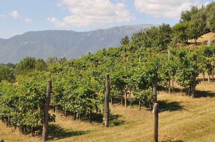 evVIVA il vino sostenibile