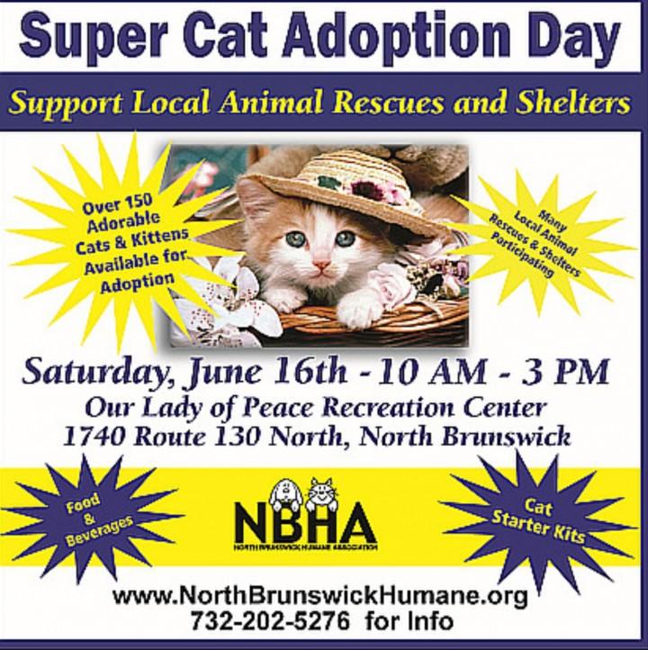 Super Cat Adoption Day