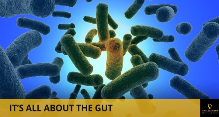 It's All About The Gut