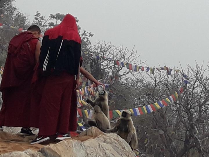 The Heart Sutra - Essence of the Buddha's Tea