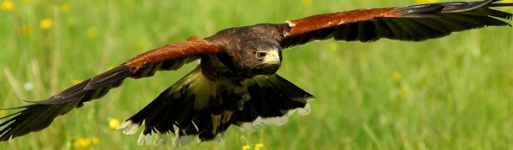 Birds of Prey Action & Portrait Photography