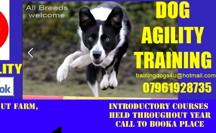 Dog Agility Introductory Course