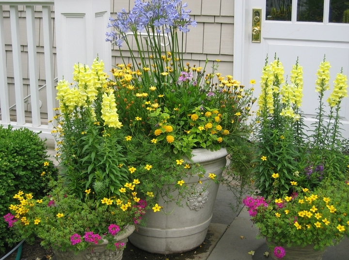 Amazing Annuals—Usual, Unusual, and Where to