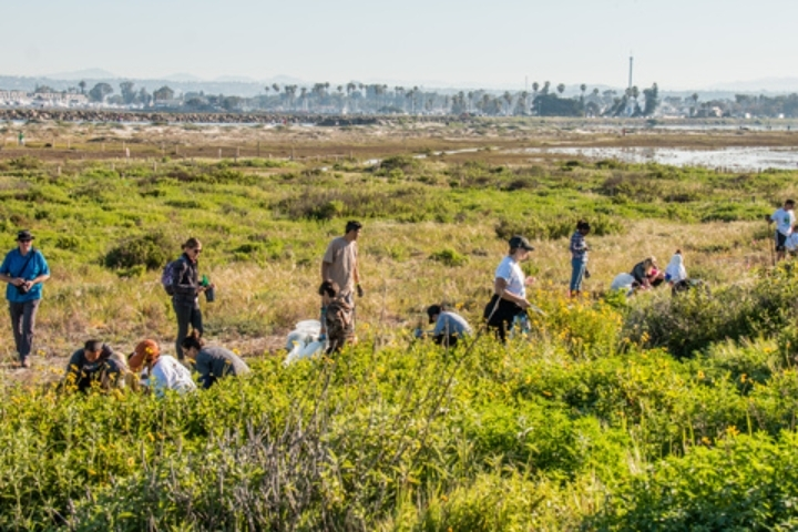 Coastal Habitat Restoration - at the beach!