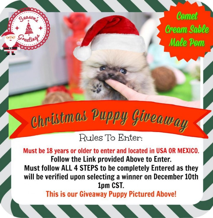 Christmas Puppy Giveaway Event