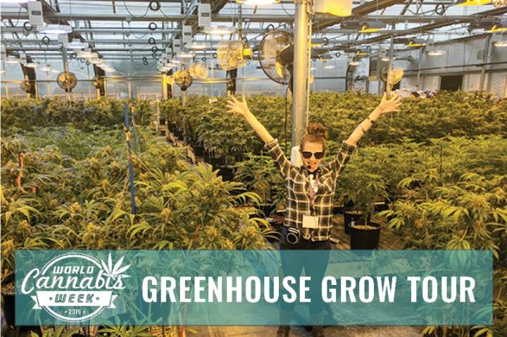Greenhouse Grow Tour