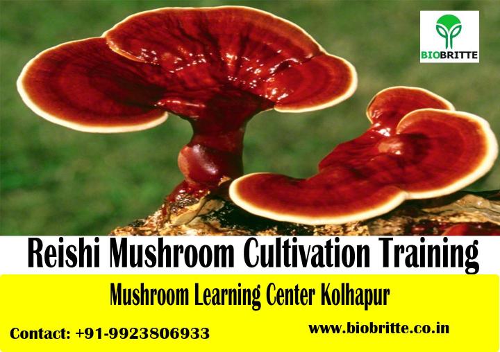 Reishi Mushroom Training-3 Days