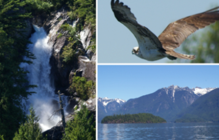 Pitt Lake Wilderness & Nature Cruise Special - 30% off on our 30th Anniversary year! Call the office at 604-525-4465
