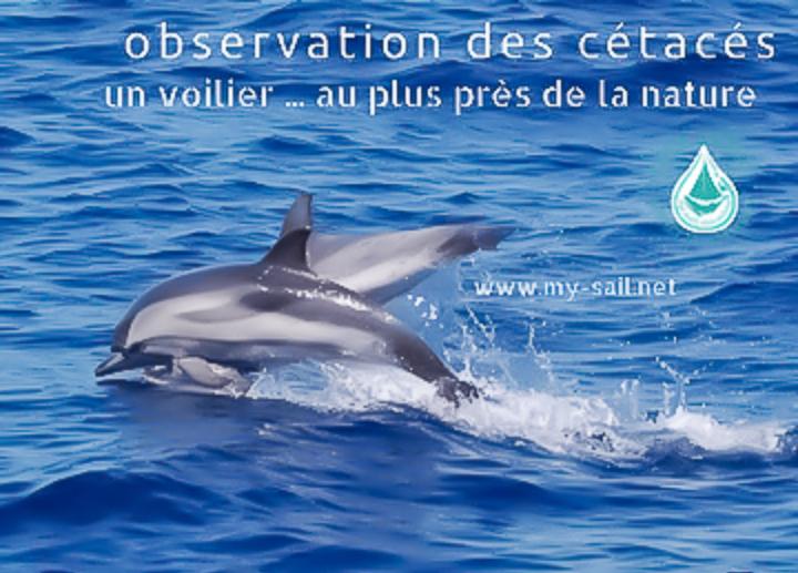 Observation des Cétacés de la Méditerranée en voilier - Sortie dauphins